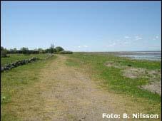 Beijershamn vid kusten på Öland